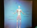 Body-Worlds-Vital-015