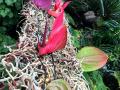 Dan-odprtih-vrat-v-podjetju-Ocean-Orchids-008