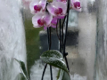 Dan-odprtih-vrat-v-podjetju-Ocean-Orchids-011