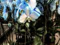 Dan-odprtih-vrat-v-podjetju-Ocean-Orchids-012