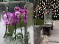 Dan-odprtih-vrat-v-podjetju-Ocean-Orchids-021