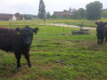 Obisk-Ekoloske-kmetije-Rengeo-008