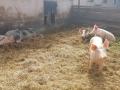 Obisk-Ekoloske-kmetije-Rengeo-016