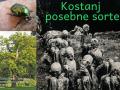 Ana-Vida-in-Vanesa-Tot-3.-bc-I.-Cankar-Kostanj-posebne-sorte