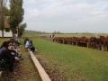 Strokovna-ekskurzija-na-Madzarsko-24